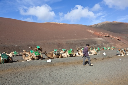 TIMANFAYA NATIONAL PARK, LANZAROTE, SPAIN - DECEMBER 26: camel rider waiting for tourists riding on camels through the famous Timanfaya National Park in December 26, 2010 in Lanzarote, Spain Stock Photo - 12256624