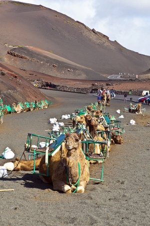 TIMANFAYA NATIONAL PARK, LANZAROTE, SPAIN - DECEMBER 26: Tourists riding on camels being guided by local people through the famous Timanfaya National Park in December 26, 2010 in Lanzarote, Spain Stock Photo - 12256621