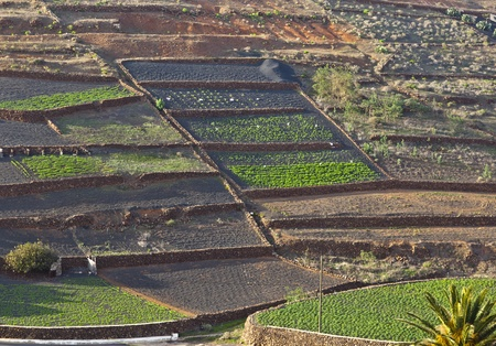 fields in rural hilly area in Lanzarote photo