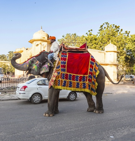 jaipur: JAIPUR, INDIA - NOVEMBER 12 : Elephant in Jaipur Fort at November 12,2011 in Jaipur, India. Indian elephants wait for tourist inside the old city, a great attraction in Rajasthan.