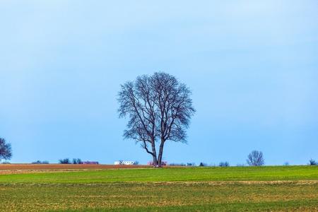 beautiful landscape with single tree in fields photo