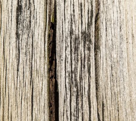peace of cutted wood Stock Photo - 12858839