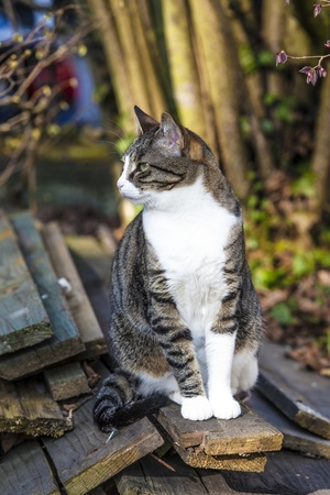 cute cat in the garden photo