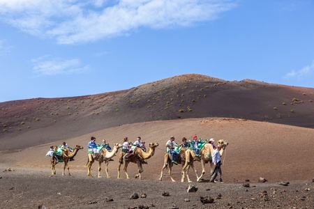 TIMANFAYA NATIONAL PARK, LANZAROTE, SPAIN - APRIL 5: Tourists ride on camels being guided by local people through the famous Timanfaya National Park in April 05,2012. Stock Photo - 13162147
