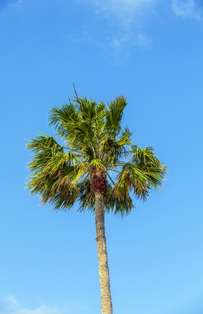 crown of palm tree photo