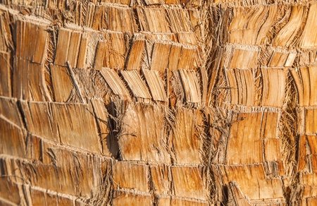 Rough brown palm tree wood bark natural texture background photo
