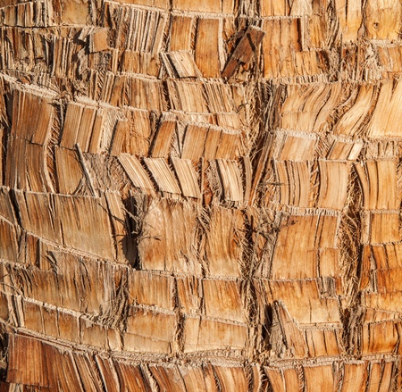 Rough brown palm tree wood bark natural texture background Stock Photo - 13369878