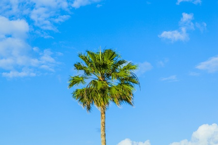 crown of palm tree photo