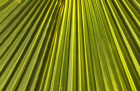 structure of palm tree in bright morning sun photo