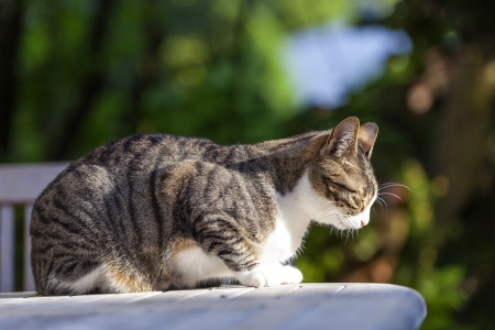 cute cat relaxing on a wooden table in the garden Stock Photo - 13972730