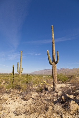 beautiful green cacti in landscape photo