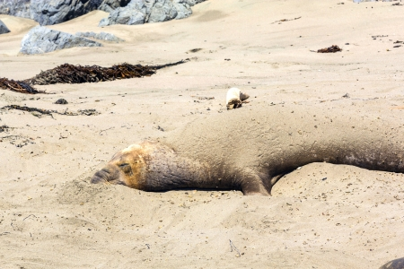 sea lions relaxing at the beach photo