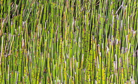 pattern of small bamboo plant photo