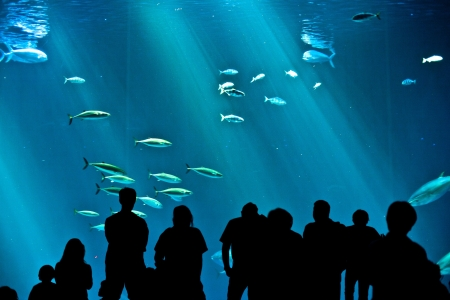 people watch the fishes in the aquarium photo