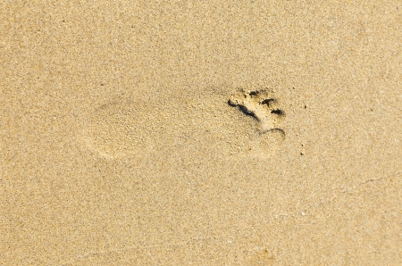 footprint at the beach photo