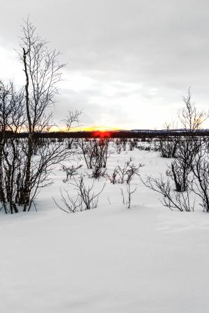 magnetosphere: tramonto in Finlandia negli snowscape con alberi Archivio Fotografico
