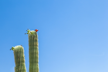 blooming cactus in detail in the desert with blue sky photo