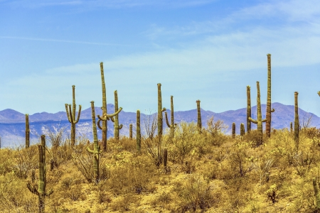 blooming cactus in detail in the desert with blue sky Stock Photo - 14675273