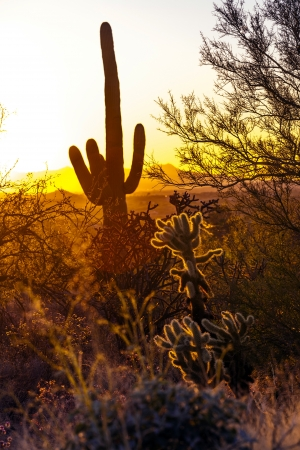 cactus in the desert in romantic sunset photo