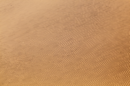 beautiful sand dune in sunrise in the desert Stock Photo - 14850631