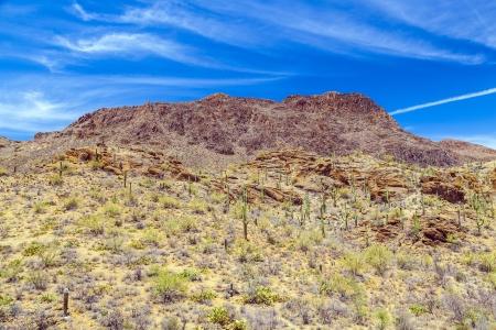 tuscon: beautiful mountain desert landscape with cacti near Tuscon, Arizona