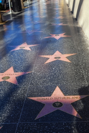 blvd: HOLLYWOOD - JUNE 24: many stars  like Donald Sutherland or Friz Freleng on Hollywood Walk of Fame on June 24, 2012 in Hollywood, California. These stars are some of  2400 celebrity stars on Hollywood Blvd.