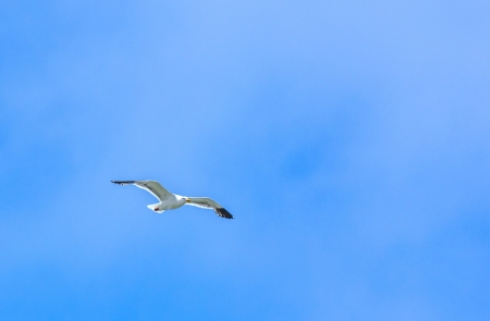 seagull flying in the blue sky photo