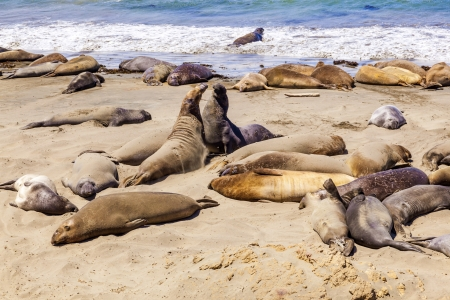 Sealions at the beach photo