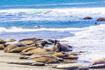 hugging young male Sea lions at the sandy beach relax photo