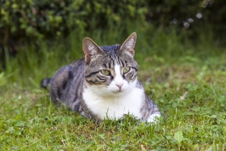 cute cat relaxing in the garden photo
