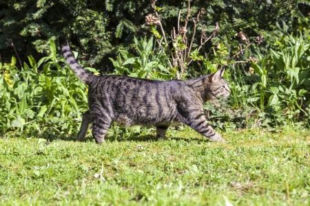 cute cat relaxing in the garden photo