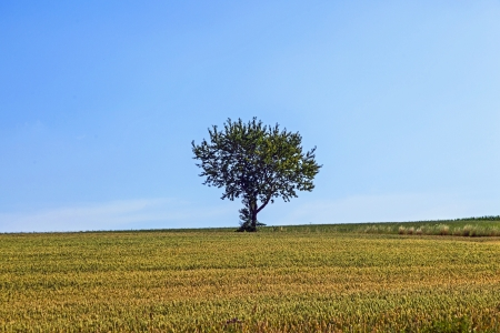 lonely tree at the meadow in autumn photo