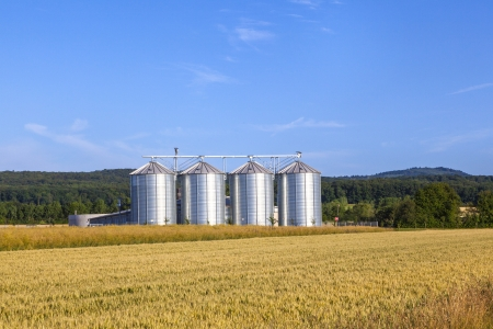 four silver silos in corn field Stock Photo - 15461666