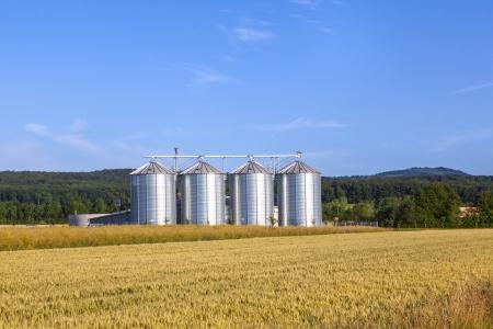 four silver silos in corn field Stock Photo - 15461666
