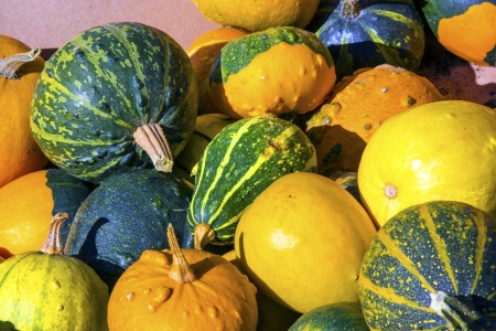 Colorful pumpkins collection on the market Stock Photo - 15564893