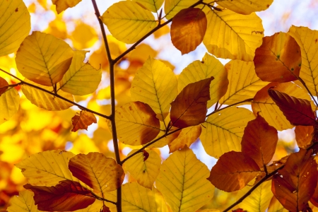 beautiful leaves in indian summer light in autumn photo