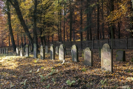 old jewish cemetery in the oak forest photo