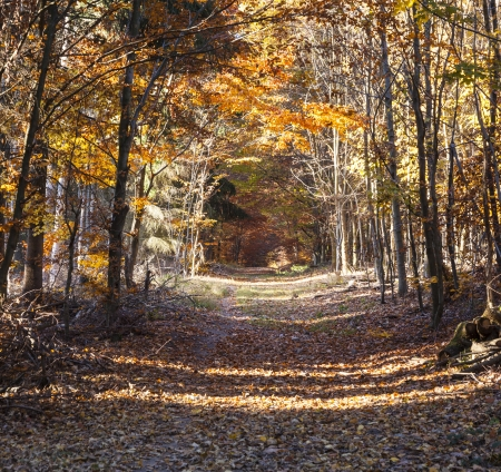 beautiful forest in indian summer light in autumn Stock Photo - 15672042