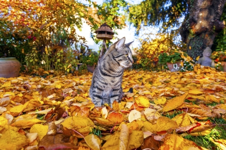 cat strolling around in the garden with foliage photo