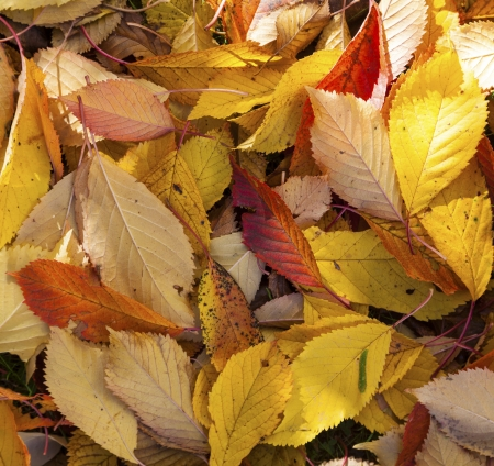 pattern of foliage lying at the grass in autumn photo