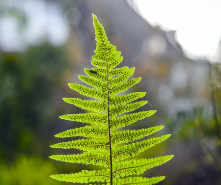 fern in sunlight in the forest photo