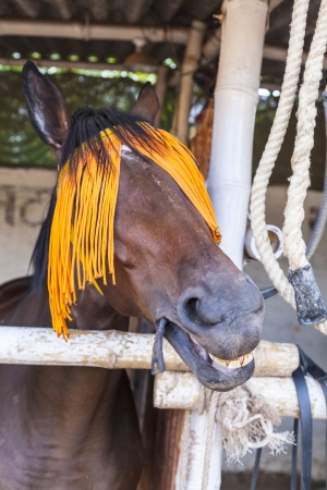 portrait of horse with orange horse-gear photo