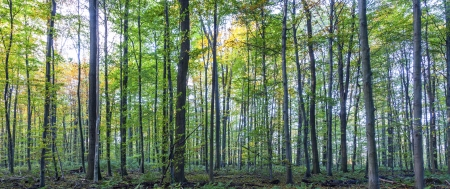 harmonic pattern of oak trees in the forest Stock Photo