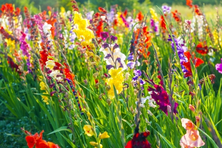 beautiful flowers in the meadow photo