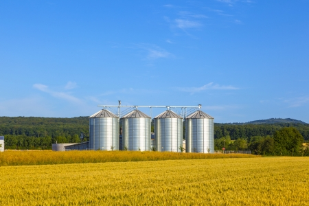 storage bin: four silver silos in corn field