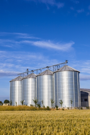 four silver silos in corn field Stock Photo - 16846129