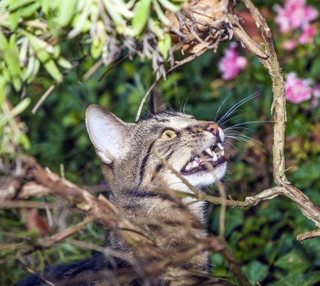 cat is hunting in the garden Stock Photo - 16846064