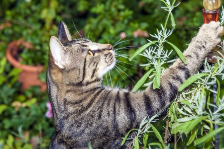 cat is hunting in the garden Stock Photo - 16846264