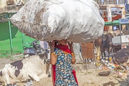 unskilled: JODHPUR,INDIA - OCTOBER 23: Indian woman carries heavy load on her head on October 23, 2012 in Jodhpur, India. Indian women work more than men but their work is hardly recognized as they mainly do unskilled work.