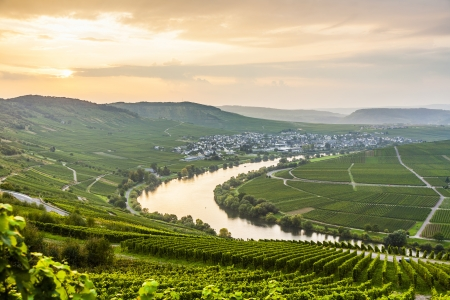 mosel: famous Moselle Sinuosity in Trittenheim, germany
